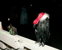 6376 Halloween on Vashon 2011