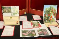 0416 Ageru PTSA Auction 2010